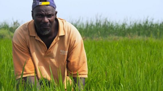Five years on: Syngenta's Africa ambition bearing fruit, but access to technology by small farmers remains limited